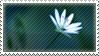 Ode to simplicity stamp 01 by teyasaveleva