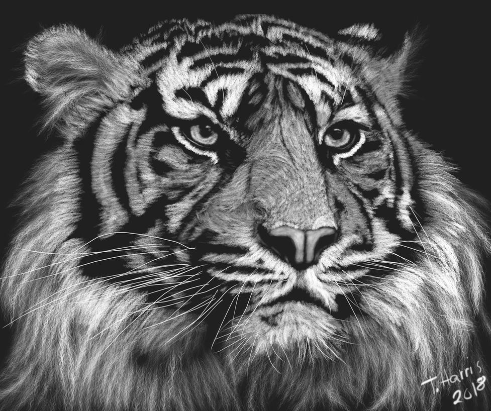 King tiger painting by m0osegirlhunter