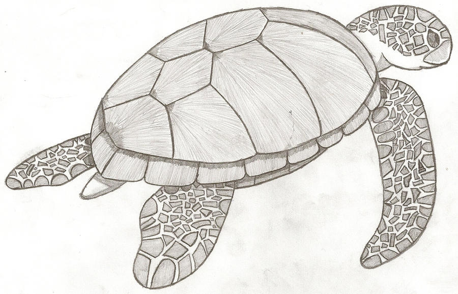 easy draw turtle - photo #35