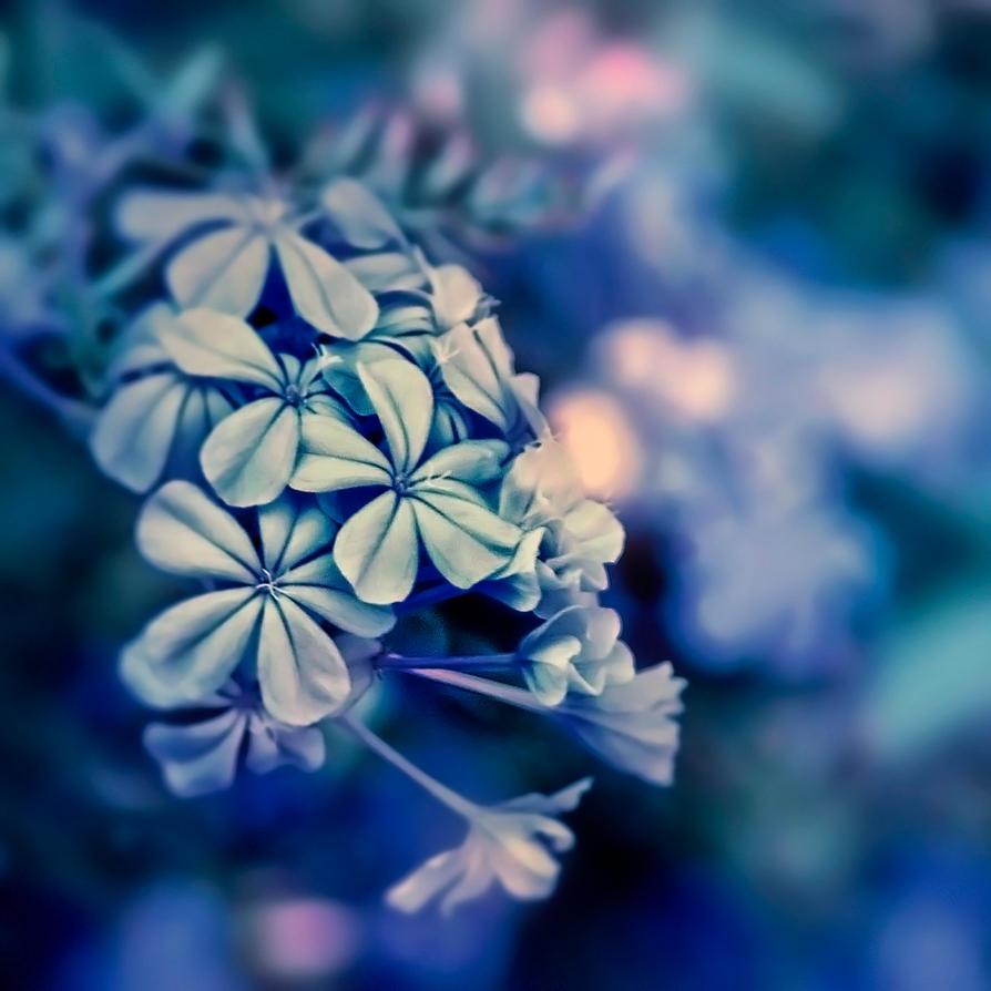 Blues by mebilia