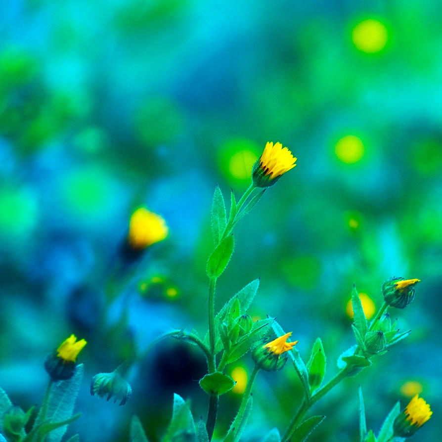 bright as yellow by mebilia