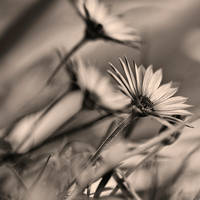 colorless spring by mebilia