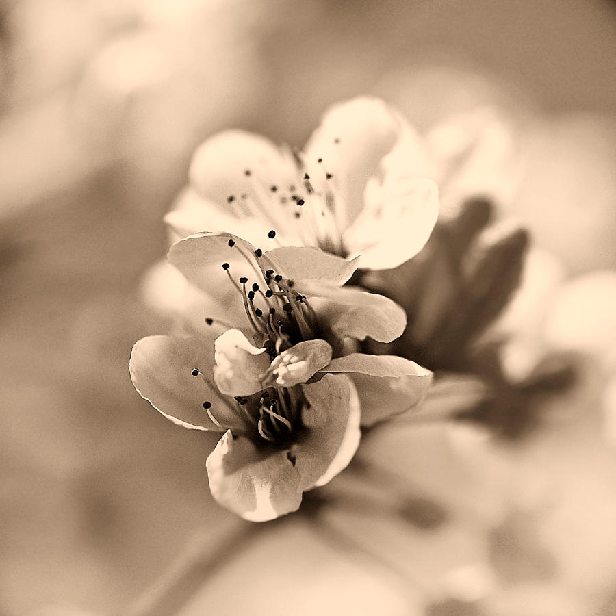 melancholic spring by mebilia