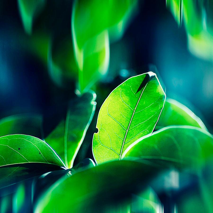 green by mebilia