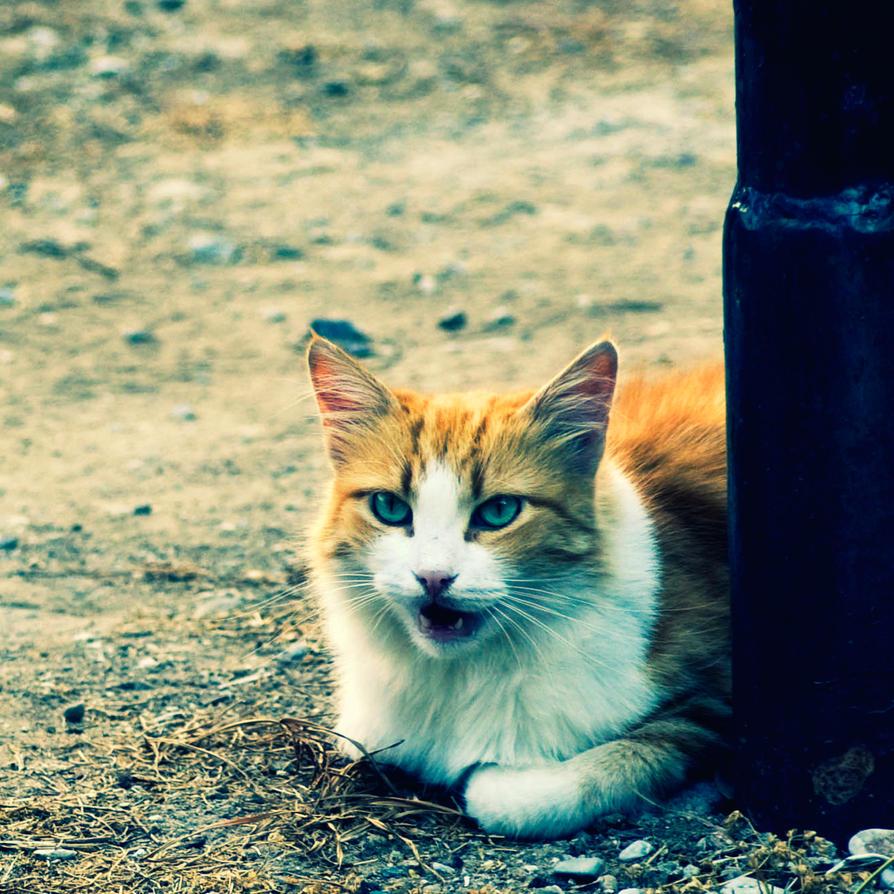 The sunshine cat by mebilia