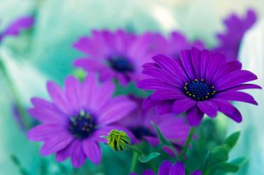 Purple by mebilia