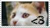 I lurve j00 Kitteh stamp by MyLastBlkRose