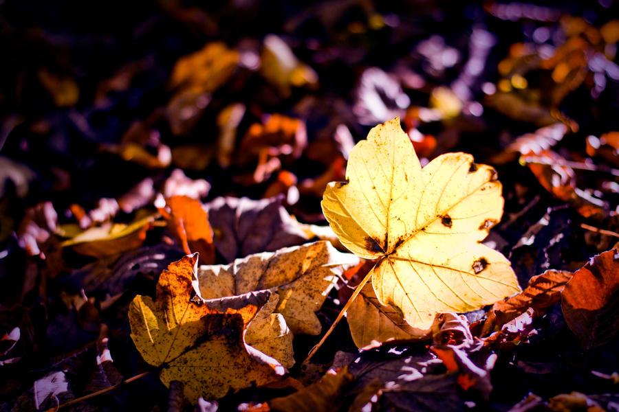 golden autumn by riskonelook
