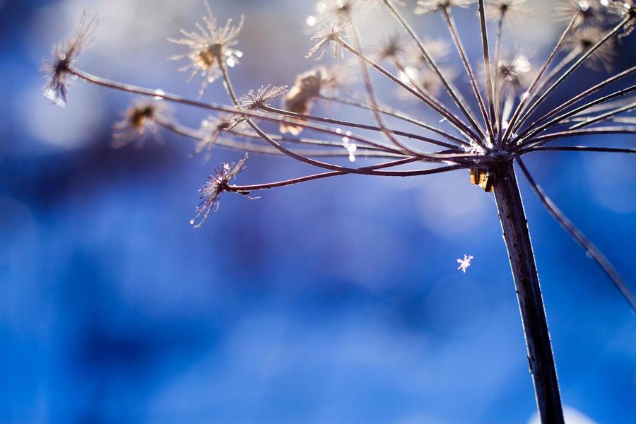 falling snowflake by riskonelook