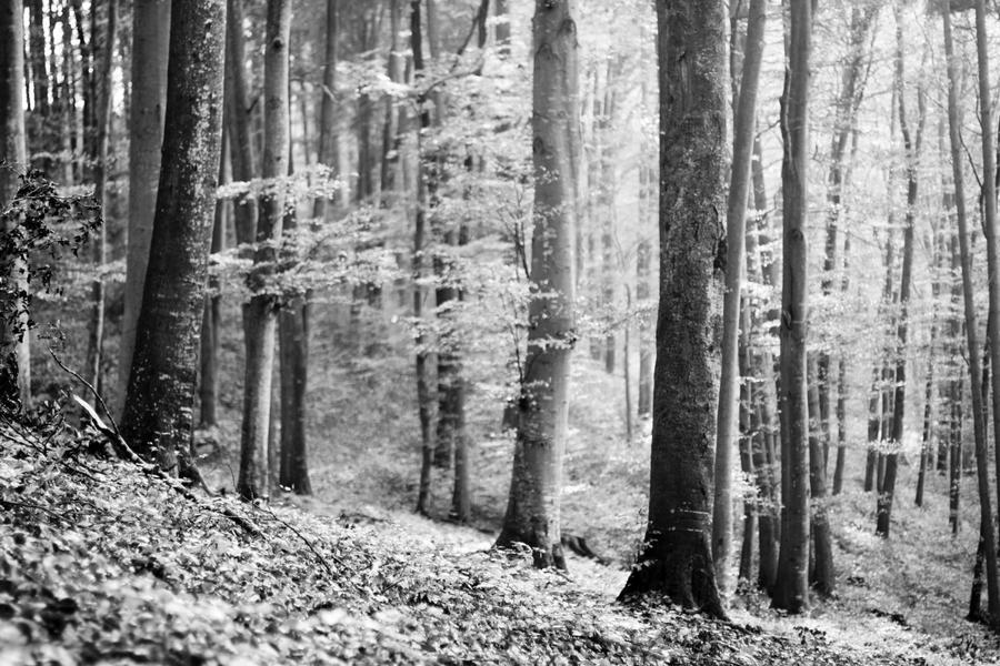 buchenhain by riskonelook