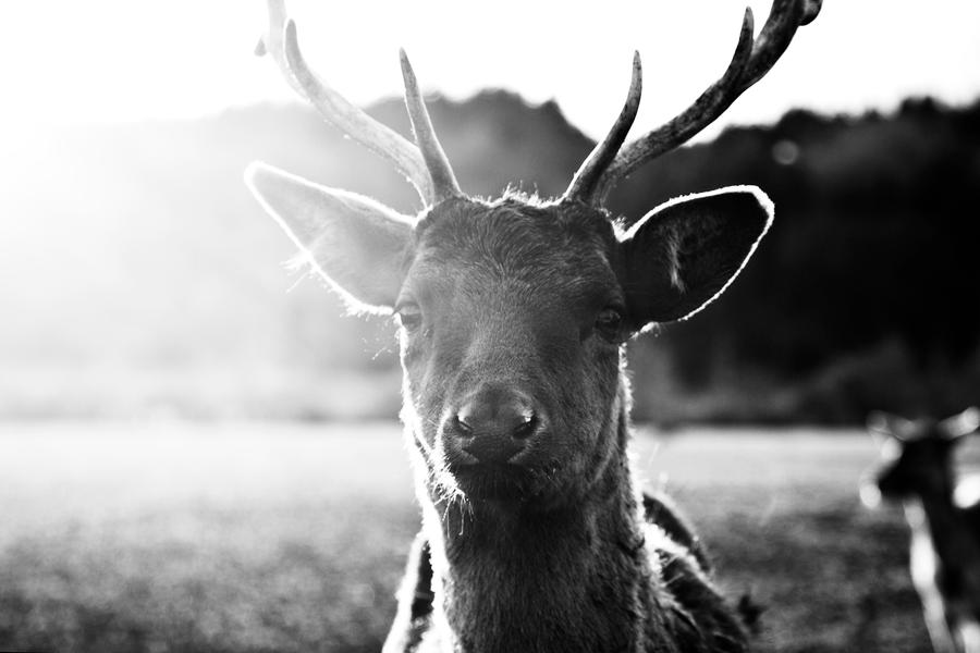 glowing deer iv by riskonelook