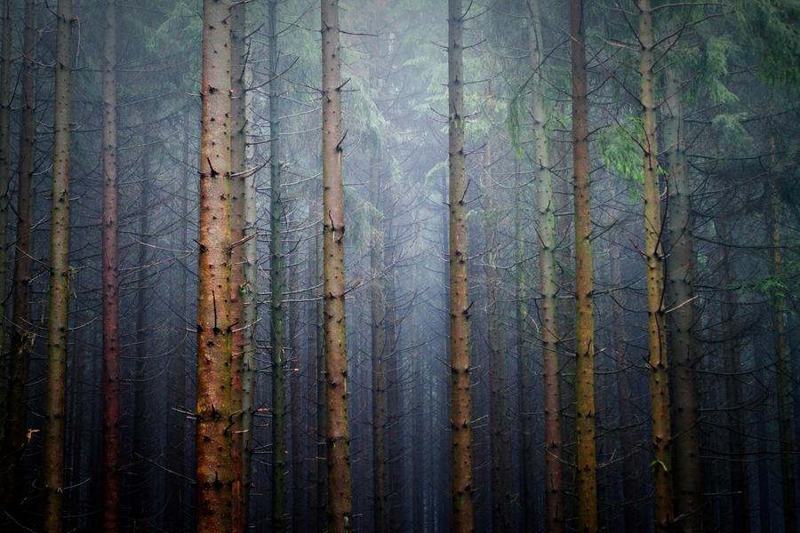 lost in trees by riskonelook