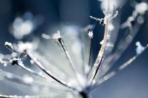 breath of winter ii by riskonelook