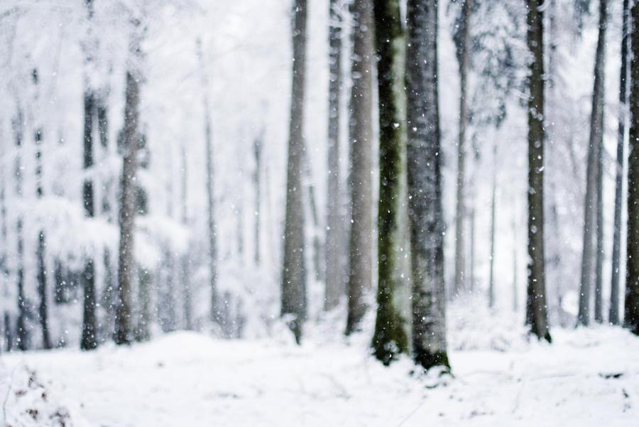 so muss winter ii by riskonelook