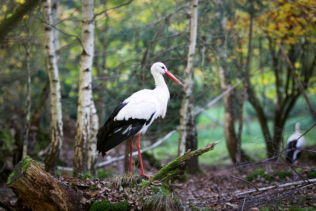 storks in the forest by riskonelook