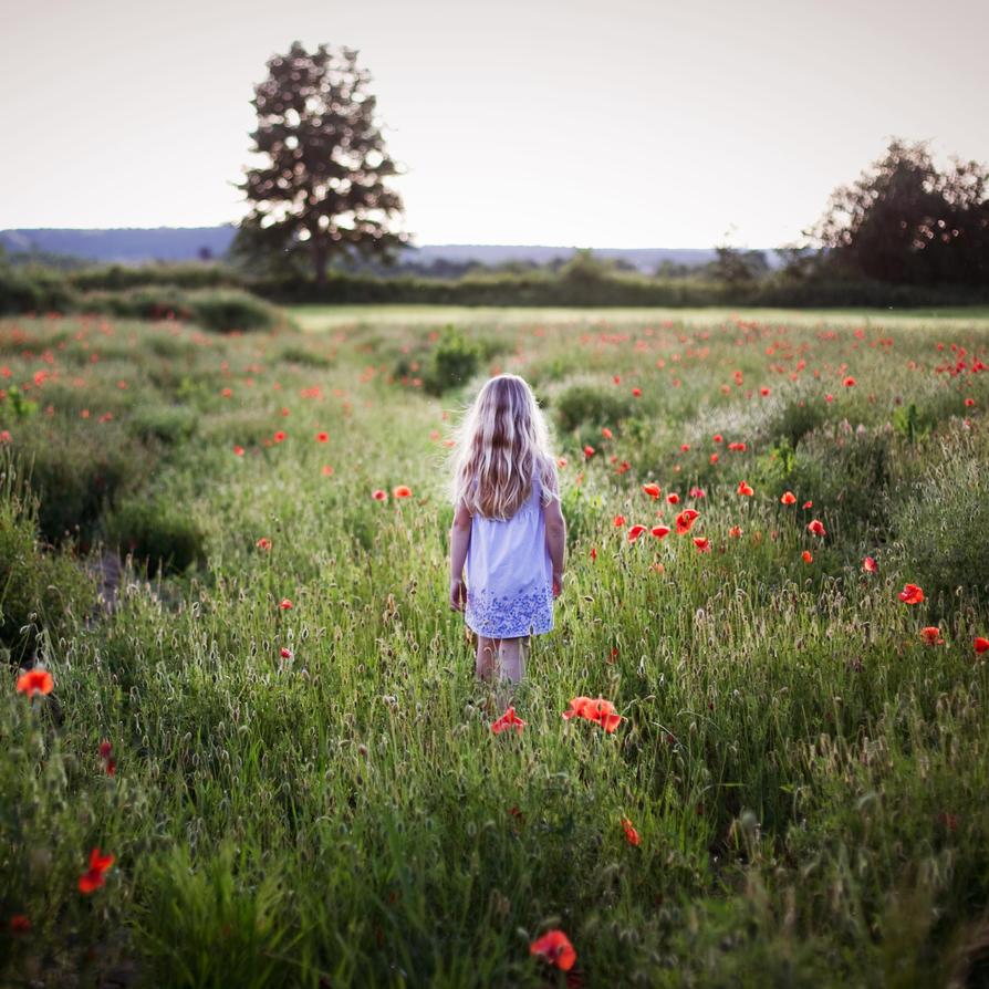 in poppy field by riskonelook