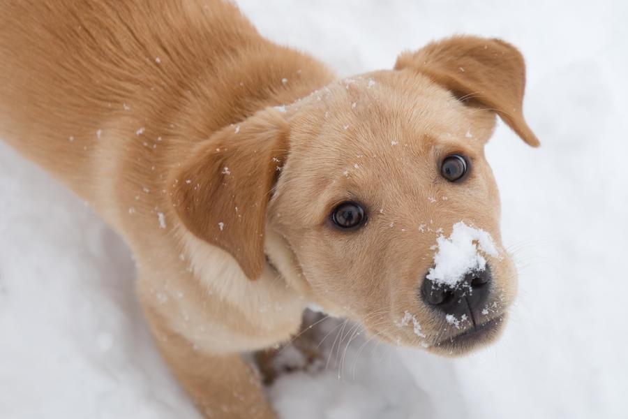 first snow by riskonelook
