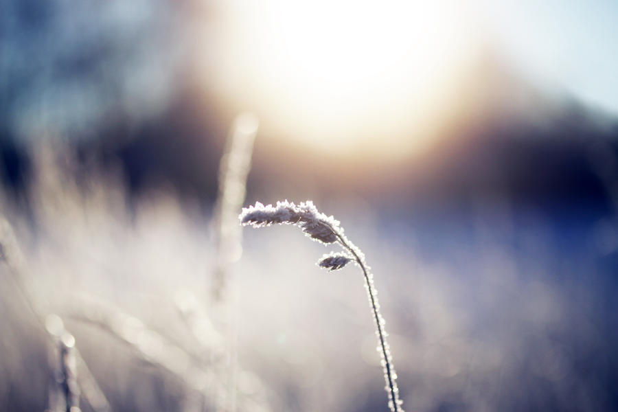 kissed by the winter sun by riskonelook