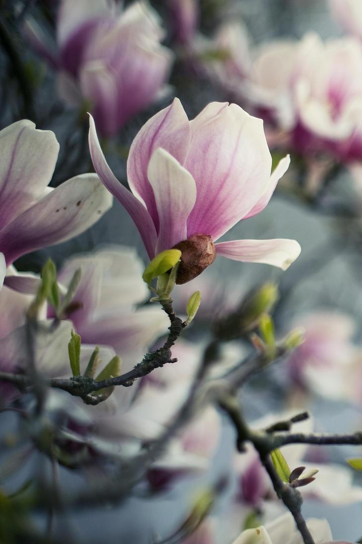 beautiful spring iv by riskonelook