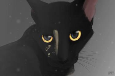 Portrait of my cat Twilight by GlitterStar2000