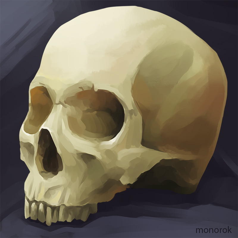 Skull study by monorok
