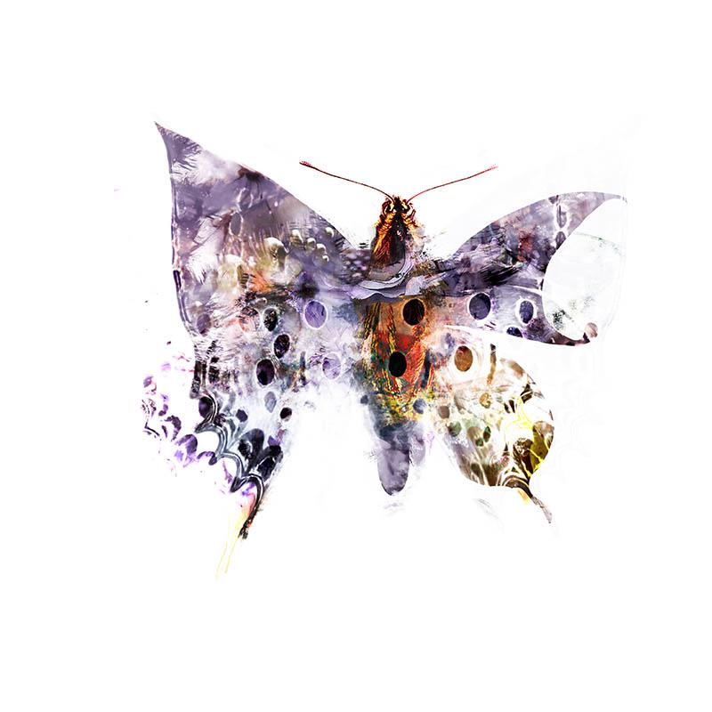 Papillon by Mcdbrd