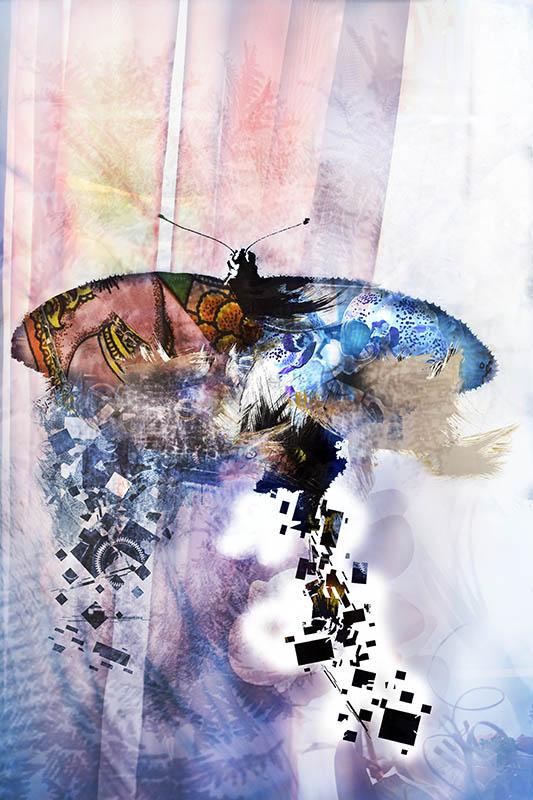 papillon 2 by Mcdbrd