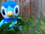 Day of a Piplup