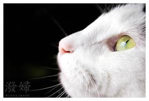 Kitty by Tatalia