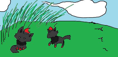 Two Zoruas by Weaselhatter