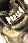 The Wolf's Fangs