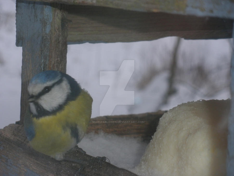 Bird by mariasalonen on deviantart for 3 little birds salon