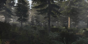 Morning in the Forest by SwissAdA