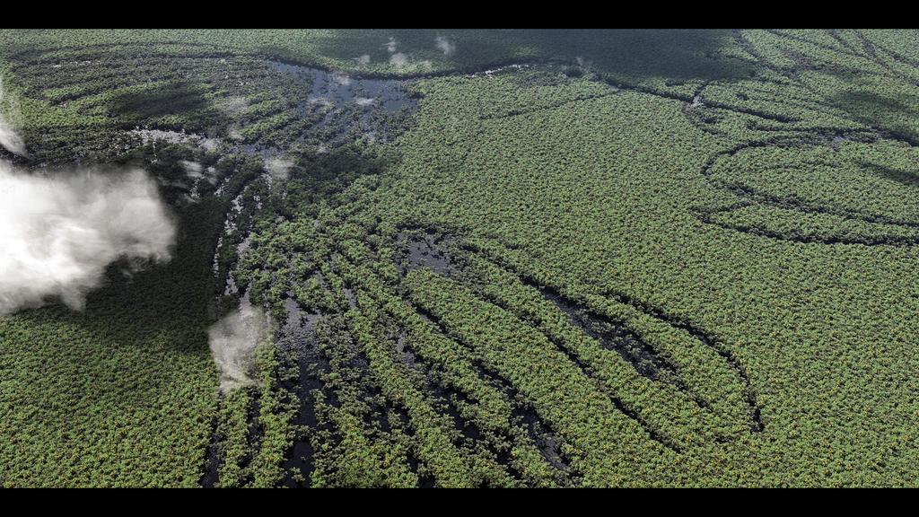 The big Colibri in the Amazon by SwissAdA