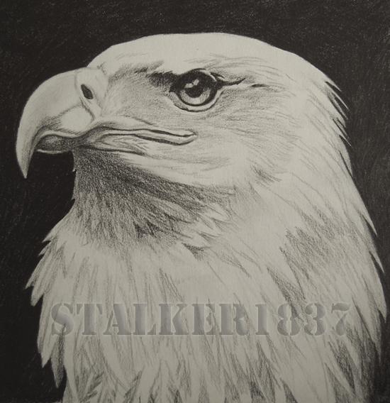 Eagle by Stalker1837