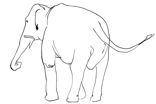 Line Drawing Of Elephant : Elephant line drawing by tomhenderson on deviantart