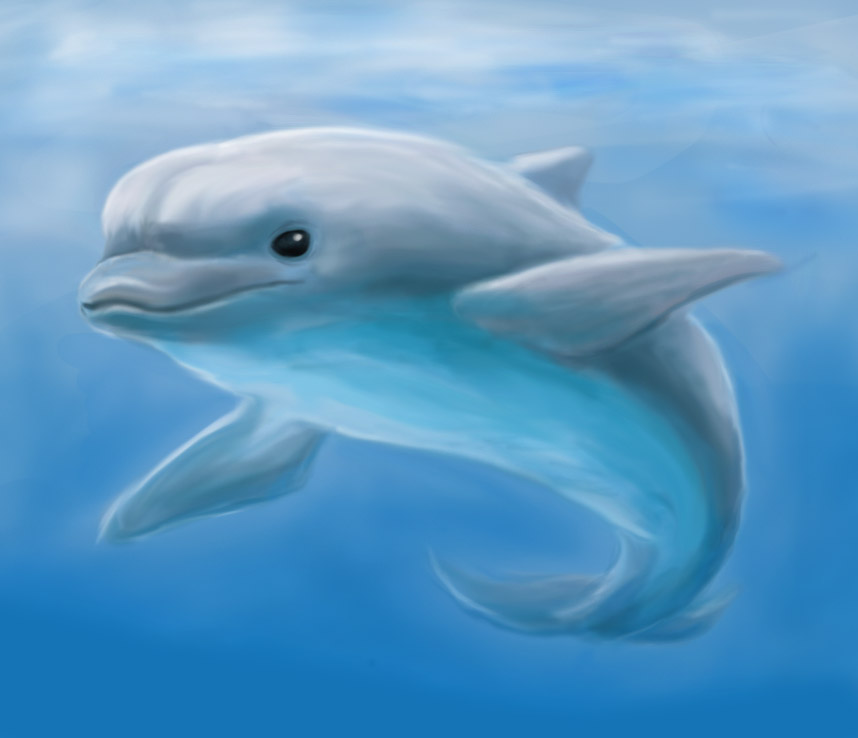 Bottlenose Dolphin by Sherushi on DeviantArt