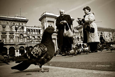Pigeons know facts by aReaperLook
