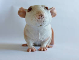 Dumbo Roan Rat Commission by philosophyfox