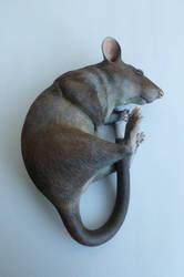 Gambian Pouched Rat Sculpture alt angle