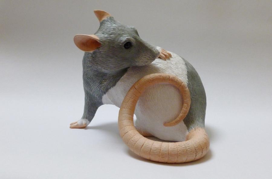 Hooded Fancy Rat alt angle by philosophyfox