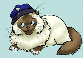 ossifer kitty by swift-whippet