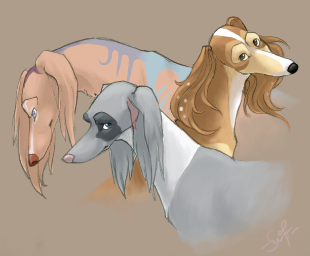 saluki trio by swift-whippet