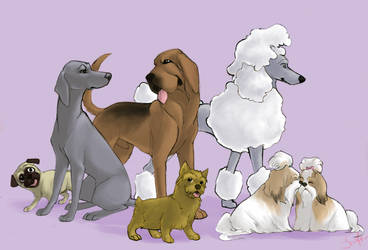 Best In Show - Dogs by swift-whippet
