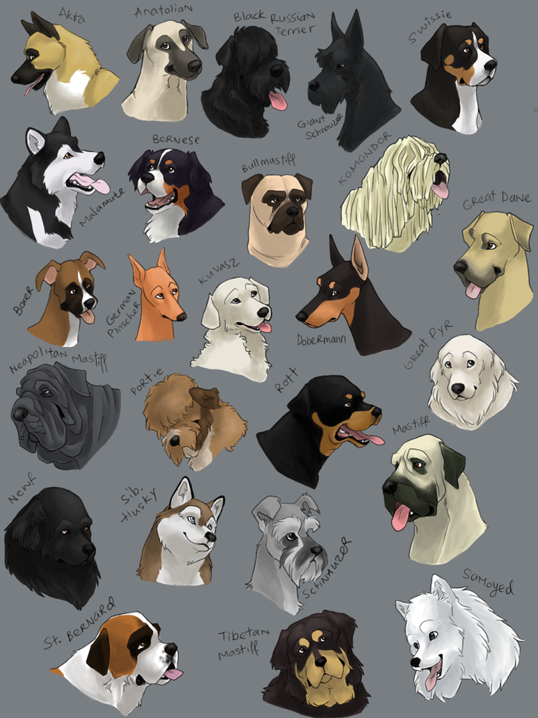 Dog Breeds Normally In A Pack