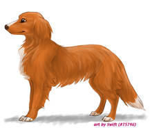 FP comm. 4 - Toller by swift-whippet