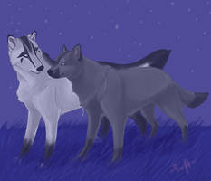 Under the Stars by swift-whippet