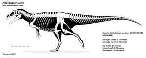 Neovenator Skeletal : IT'S THE FINAL VERSION!!! by AlternatePrehistory