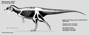 Neovenator Skeletal : IT'S THE FINAL VERSION!!! by AlternatePrehistory