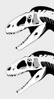 'Sinraptor' hepingensis and Sinraptor dongi